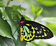 Tropical Butterfly, Close Up Shot stock photo