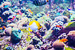 Lots Tropical Fish On A Coral Reef In Dubai Aquarium stock image
