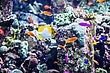 Tropical Fish On A Coral Reef In Dubai Aquarium stock photography