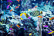 Undersea Tropical Fish On A Coral Reef In Dubai Aquarium stock photo