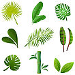 Tropical Plants Set. Vector Illustration Of Green Leaves