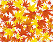Twisted Row Of Autumn Maples Leaves.