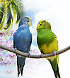 Two Budgerigars Perching On A Branch stock photo