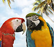 Two Colorful Parrots ,Close Up stock photo