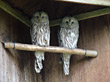 Two Owls stock image