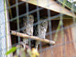 Two Owls In The Zoo stock photo