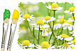 Two Paint Brushes And Summer Meadow With Daisies stock photo