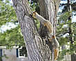 Two Squirrels Playing On A Tree In Spring Day stock image