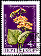 Philately USSR - CIRCA 1972: A Postage Stamp Shows Senecio Platyphylloides, Circa 1972 stock image