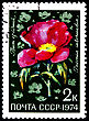 USSR - CIRCA 1974: A Postage Stamp Shows Paeonia Intermedia, Circa 1974 stock photography
