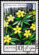 "USSR - CIRCA 1975: A Postage Stamp Shows Image Of A Yellow Anemone With The Designation ""Anemone Ranunculoides"", Circa 1975 stock image"