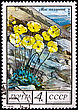 "Philately USSR - CIRCA 1975: A Postage Stamp Shows Image Of A Arctic Poppy With The Designation ""Papaver Radicatum"", Circa 1975 stock image"