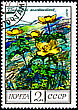 "Landscape USSR - CIRCA 1976: A Postage Stamp Shows Image Of A Golden Pasque Flower With The Designation ""Pulsatilla Aurea"", Circa 1976 stock image"