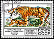 Tigers USSR - CIRCA 1977: A Postage Stamp Shows Siberian Tiger (Panthera Tigris Altaica), Circa 1977 stock photo
