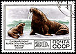 USSR - CIRCA 1977: A Postage Stamp Shows Walrus (Odobenus Rosmarus), Circa 1977 stock photo