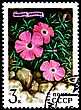 USSR - CIRCA 1977: A Postage Stamp Shows Dianthus Repens, Circa 1977 stock photography