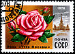 USSR - CIRCA 1978: A Postage Stamp Shows Rose Morning Moscow, Circa 1978