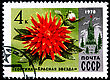 USSR - CIRCA 1978: A Postage Stamp Shows Dahlia Red Star, Circa 1978 stock photo