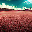 UV Landscape, Abstract Summer Backgrounds With Violet Grass Under Blue Skies stock image