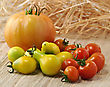 Variety Of Tomatoes , Close Up stock image