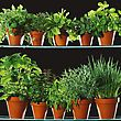 Various Herbs In Clay Pots stock photo