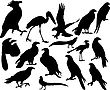 Illustrations Black Silhouettes Birds On White