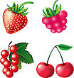 Set Of Berries Objects stock vector