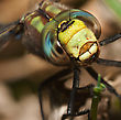 Very Close Macro Of A Colorful Dragonfly