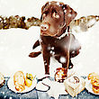 Very Sad Young Labrador Retriever In Front Of Tasty Sweet Desserts. Holiday Treats stock photography