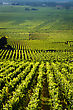 Vineyards In Gevrey Chambertin Burgundy France stock image