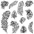 Vintage Feather Vector Set. Hand Drawn Illustration stock vector
