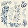 Vintage Feather Vector Set. Hand Drawn Illustration stock illustration