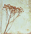 Vintage Flower On Old Book Background stock photo