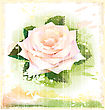 Vintage Illustration Of Pink Rose stock illustration