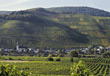 Vinyards at the Mosel, Germany stock image
