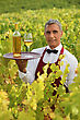 Waiter Serving White Wine In A Vineyard stock image