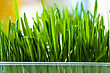Wall Of Fresh Grass Indoors stock photo