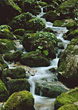 Water Flowing Between Moss Covered Rocks stock photo
