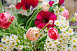 Wedding Bunch Of Flowers Closeup At Table stock image