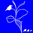 White Birds Figure On The Branch Isolated Over Blue