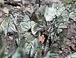 White Butterflies Sitting On A Ground. Close Up stock photo