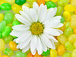 White Daisy And Colorful Candies , Close Up For Background