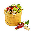 Engraving White, Red And Black Currant With Green Leaves In A Birch Tueske stock photo