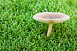 White Toadstool Growing In A Green Moss. Shallow Dof stock photo