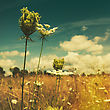 Wild Flowers On The Summer Meadow, Abstract Environmental Backgrounds stock illustration