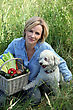 Woman With Dog And Basket Of Vegetables stock image