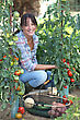 Woman Growing Vegetables stock image