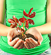 Woman Holding Seedling Grown From Soil In Her Hands stock photo