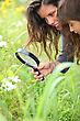 Woman And A Little Boy Watching Flowers With A Magnifying Glass stock photo