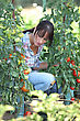 Woman With Tomato Plants stock photography